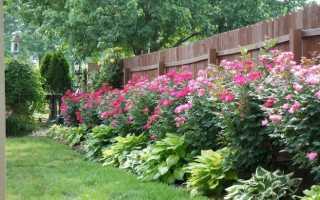 Забор для добрых соседей