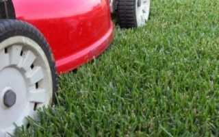 Выбор газона. Классификация и уход за газоном.