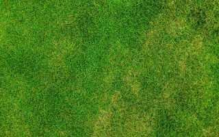 Посевной газон.